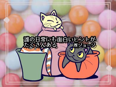 チョコレートとネコ